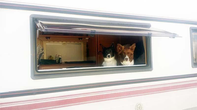 Consejos para viajar en autocaravana con tu perro